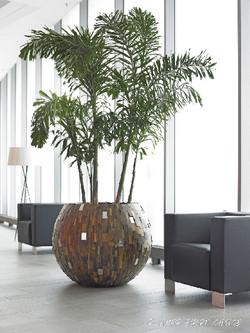 Tree in wooden pot in office