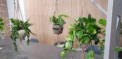Desk Hanging office plants