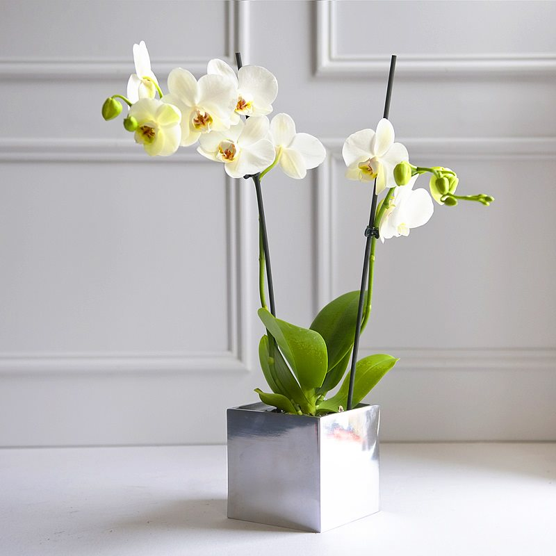 Orchid rental for offices