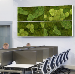 Preserved moss for offices