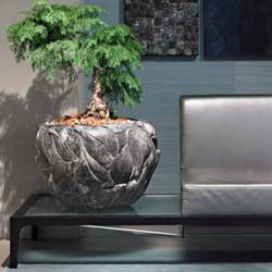 luxury plant in bowl