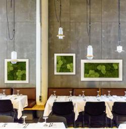 Moss Art on Wall
