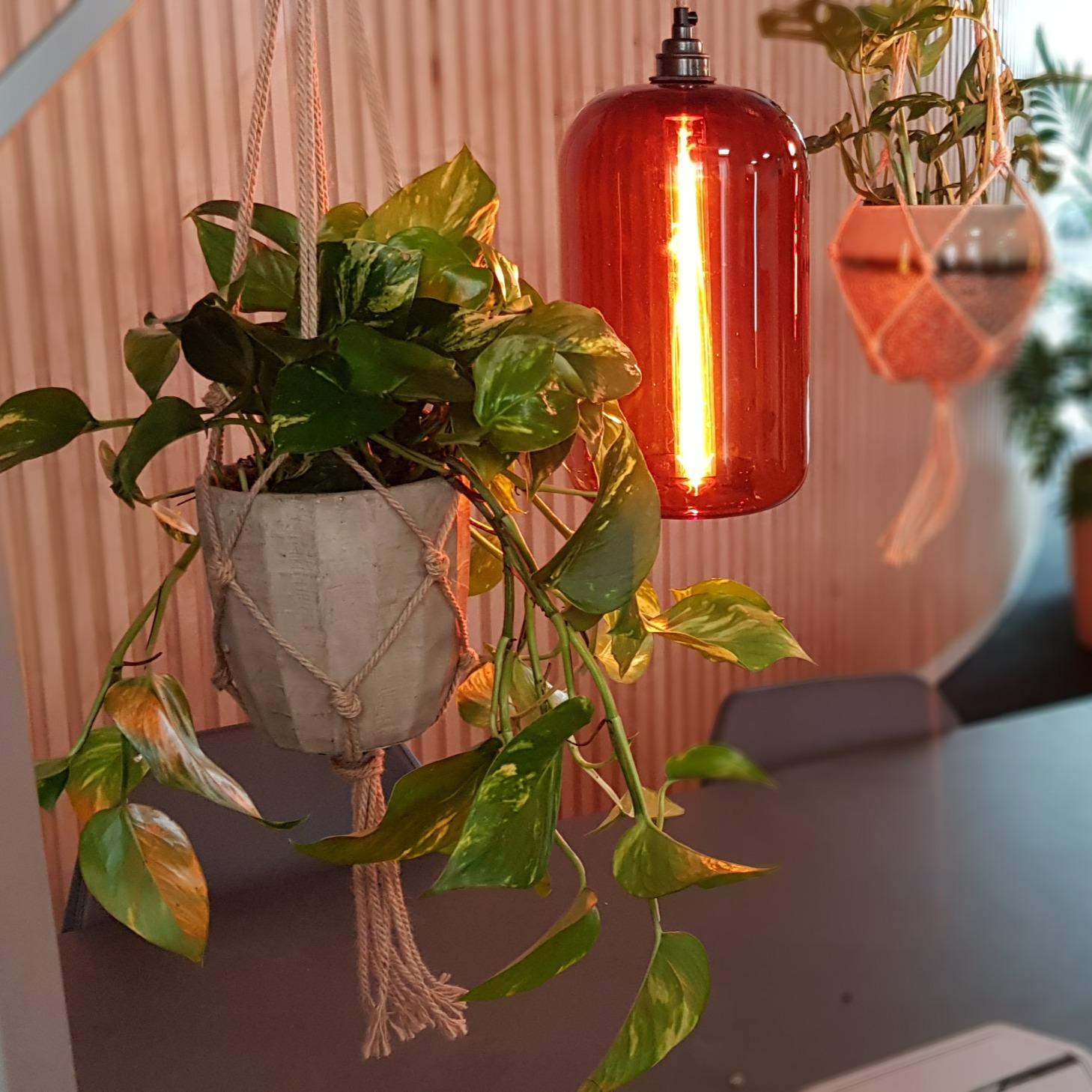 Hanging Office Desk Plants