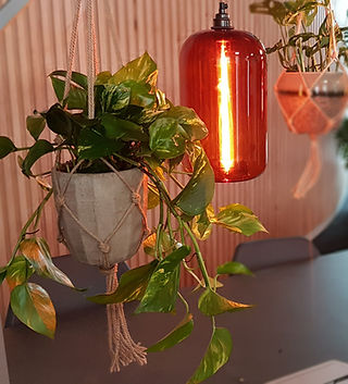 Hanging Office Desk Plants.jpg