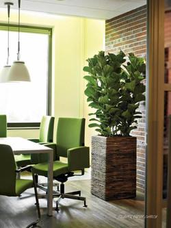 Luxury wooden office plant