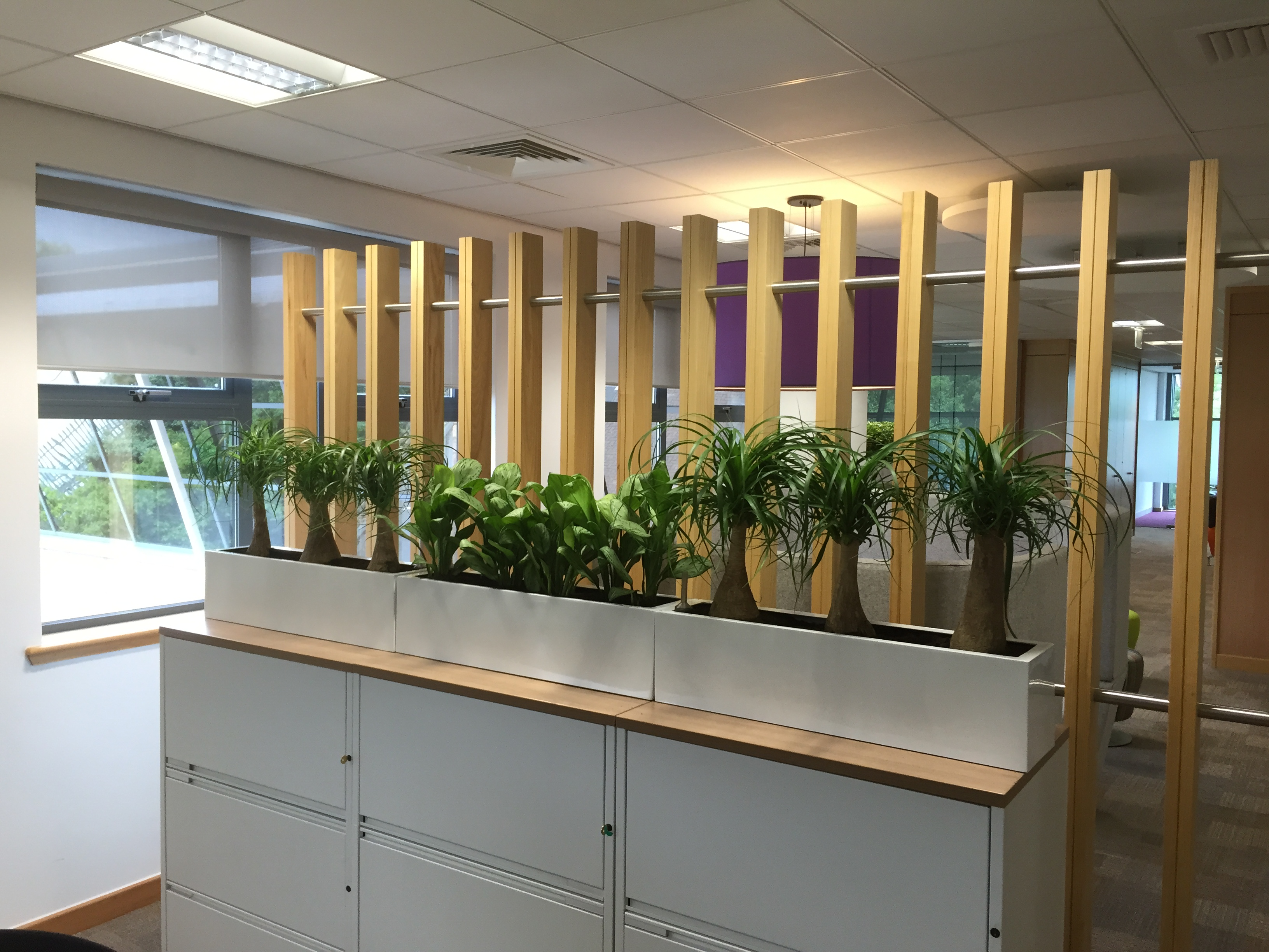 cabinet top office plant containers