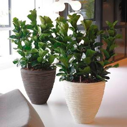 sandstone office plant pot