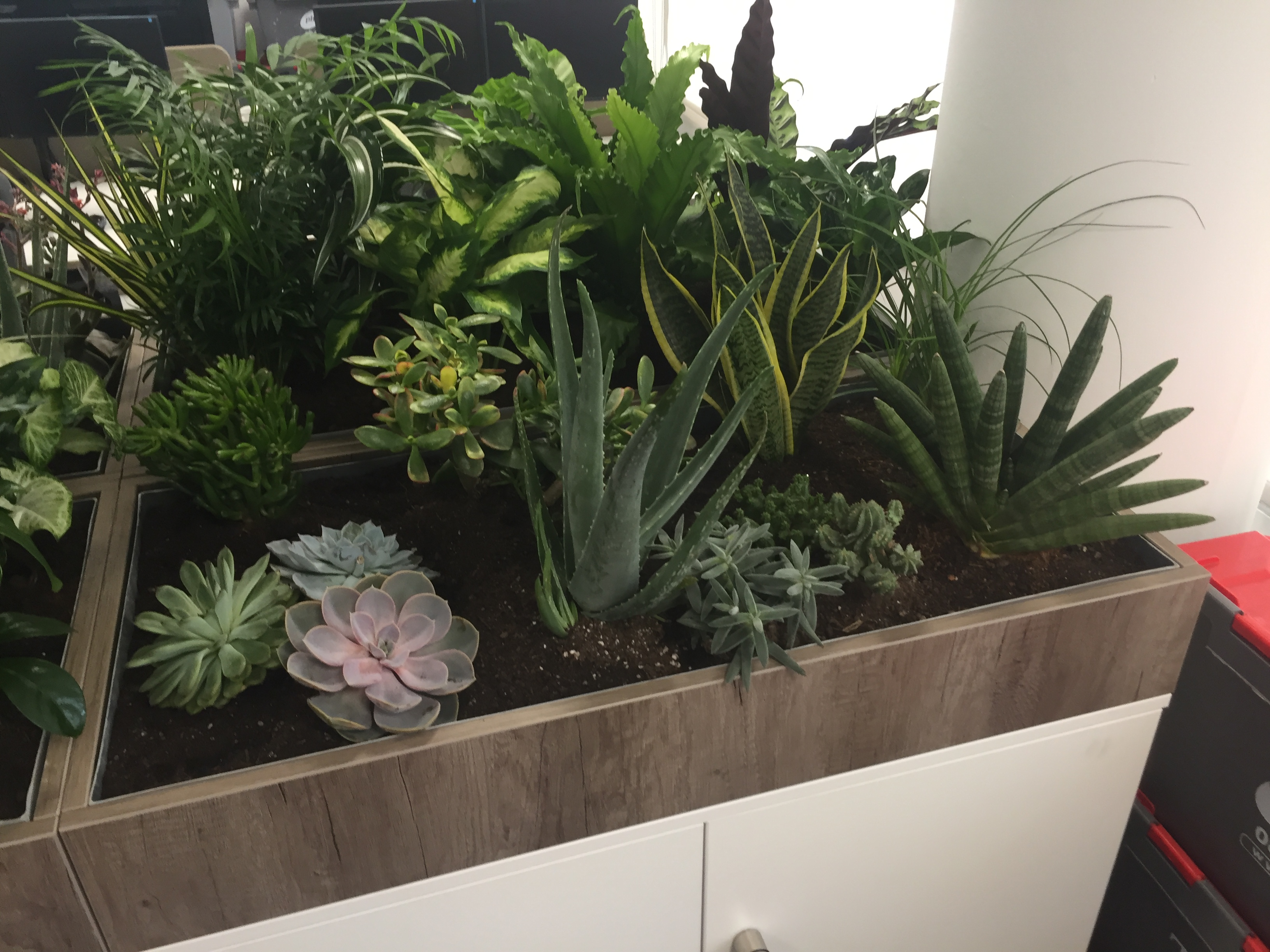 Build in office plant displays