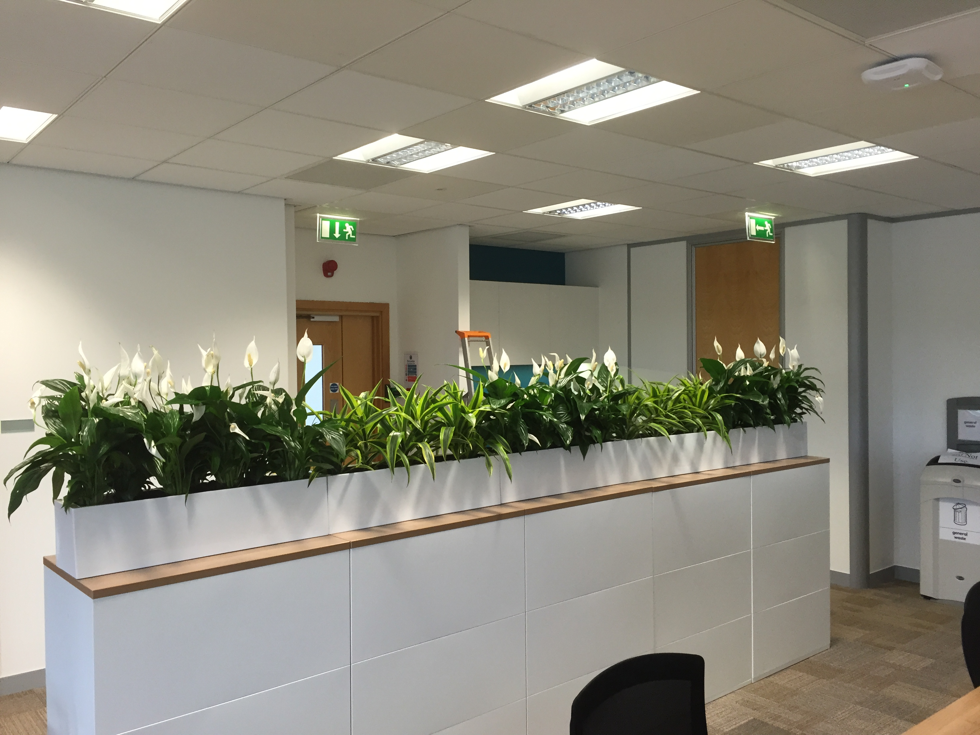 Office cabinet plant toppers