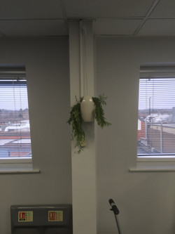 Hanging Plant pots for offices