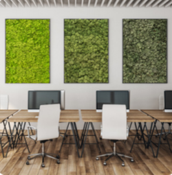 Moss walls in offices