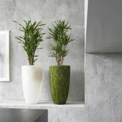 Modern Office Plant Displays