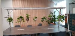 Hanging plants over office desk