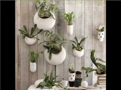 Hanging Wall Plants for offices