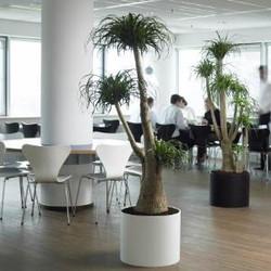 Tree in Office