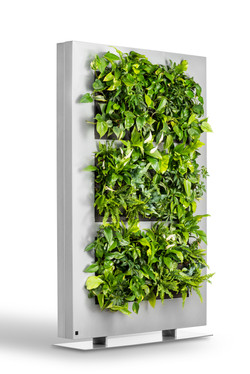 Living Wall Dividers for offices