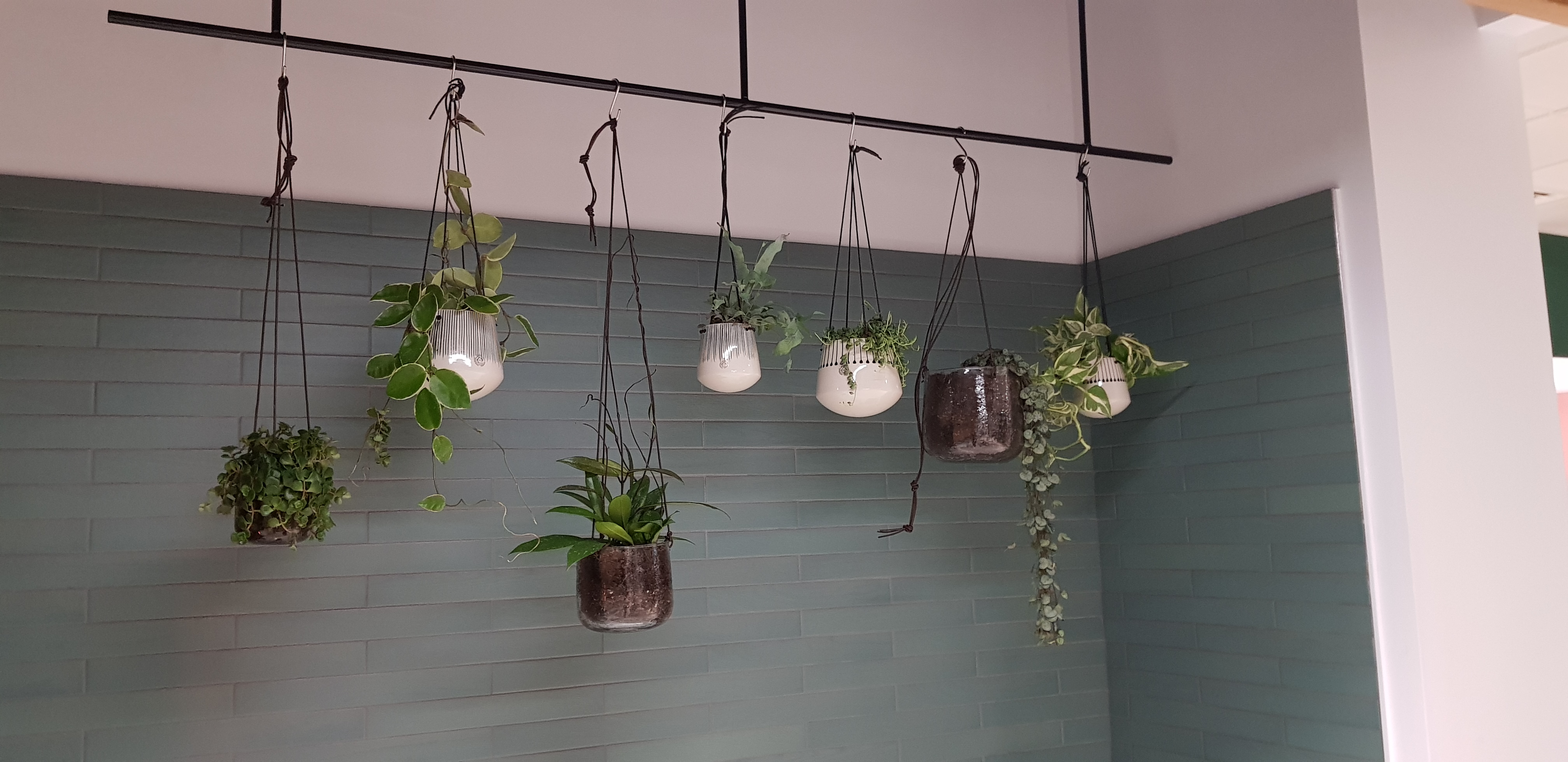 Hanging plants for offices
