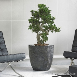 stone plant pot for office