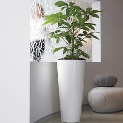 White Office Plant