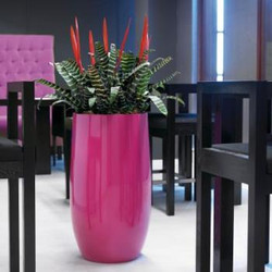 Pink Office Plant Display