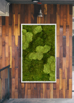 Moss Frame for offices
