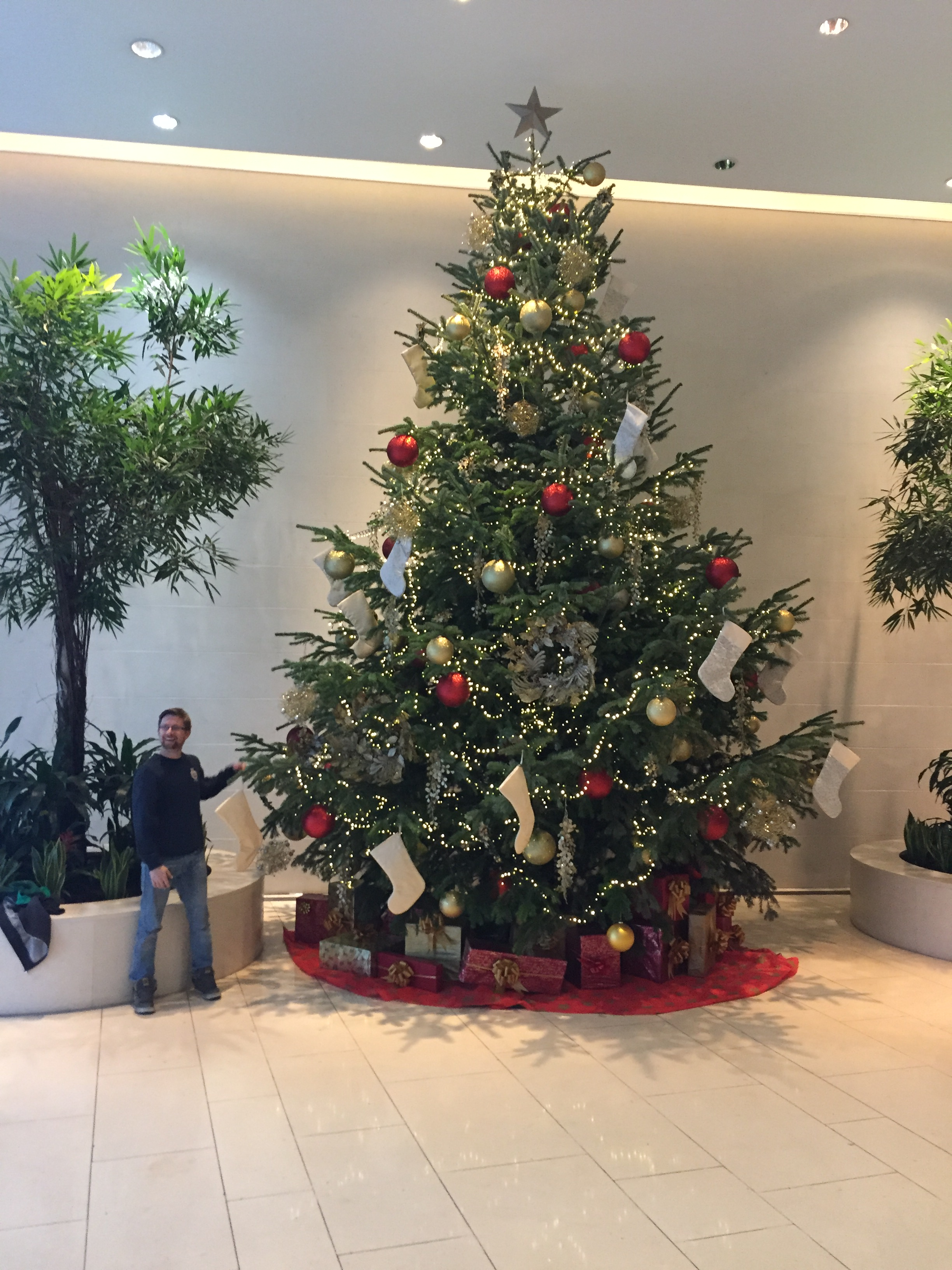 tall office christmas tree rental