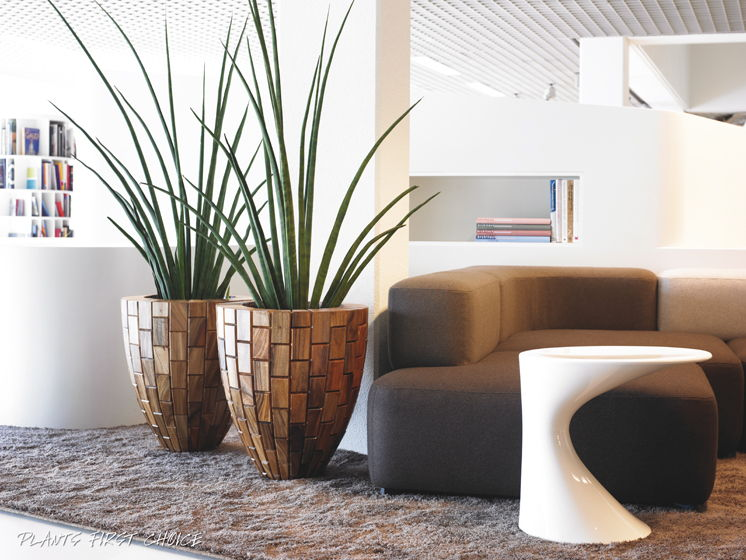 Low wooden office plant pots