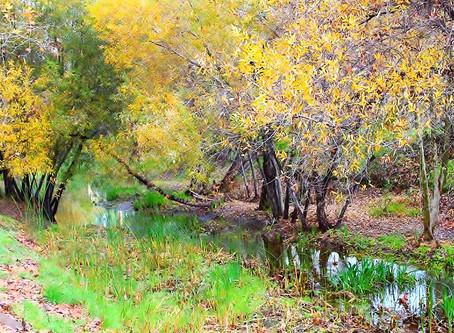 Laguna Canyon Creek Improvement Plans