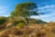 Lone Cypress Laguna Greenbelt.png