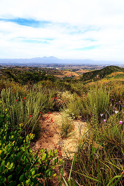 Aliso and Wood Canyons Wilderness Park h