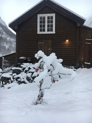 Bui vinter.jpg
