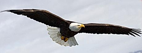 EagleMechanical-00.jpg