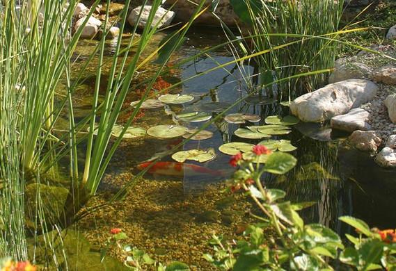 andrews+pond.JPG