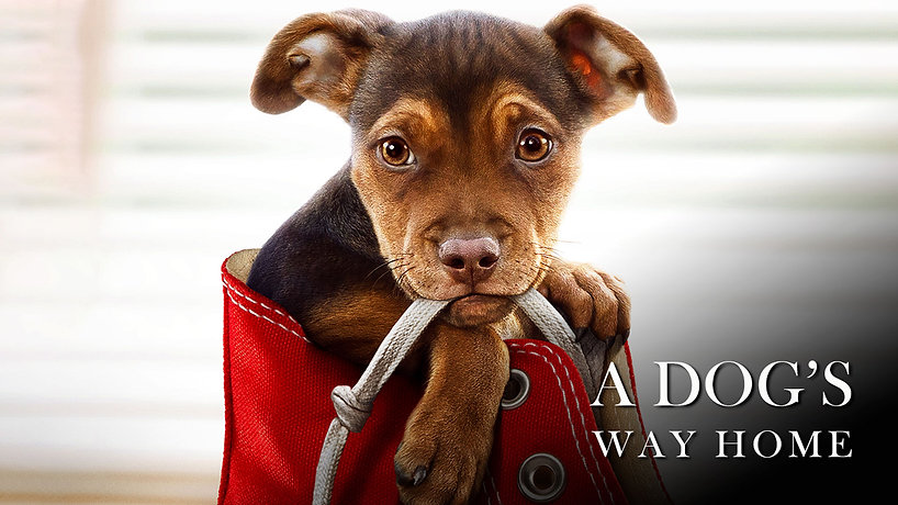 A Dogs Way Home