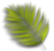 PALM20.png