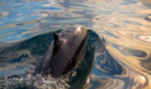 Dolphin sunrise.-3.jpg