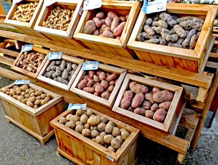 It's Time To Plant Potatoes
