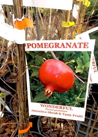 pomegranate tag