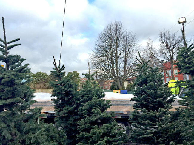We stil have Christmas trees