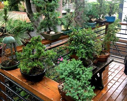 Gardening in the Age of Coronavirus: The Balcony Gardens