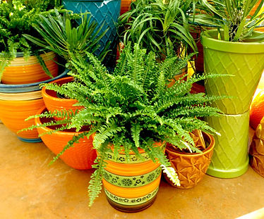 Indoor pots 2 - Copy.jpg