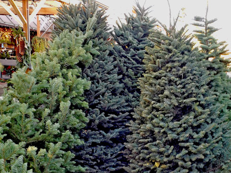 Generous Customer Offers Free Christmas Trees for Folks in Need