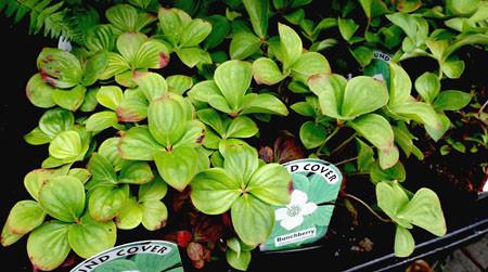 It's Washington Native Plant Appreciation Week!