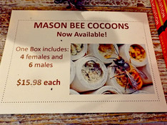 Mason bee cocoons.jpg