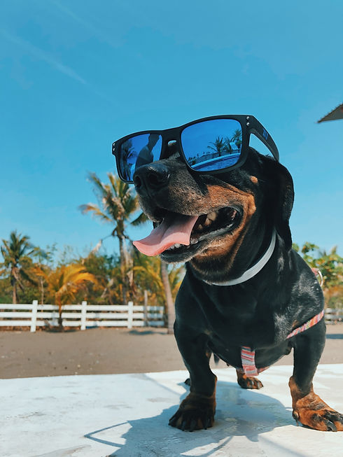 sunglasses dog.jpg
