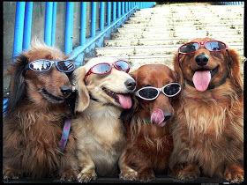 dogs glasses.jpg