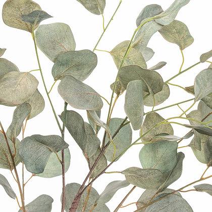 Eucalyptus Tree In Metalic Pot