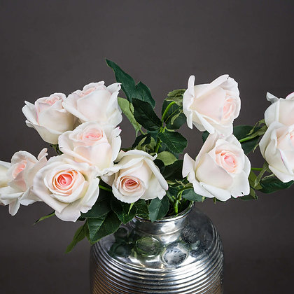 Palest Pink Tea Rose