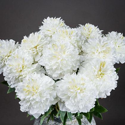 Single White Hydrangea