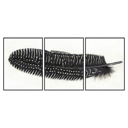 Black Feather With White Spots Over 3 Black Glass Frames